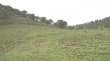 Land in Casarabonela