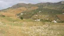 AP776- Land in Alora