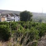 AP544- Semi-detached house in Alora