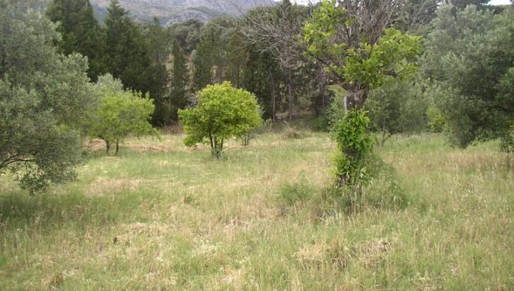 AP934- Country property in Casarabonela (under offer)