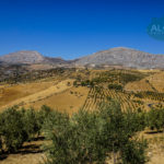 APA139- Country property in Alora