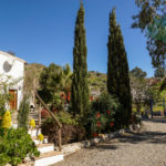 APA182- Very charming finca in 10.000 m2 of almond grove in Alora