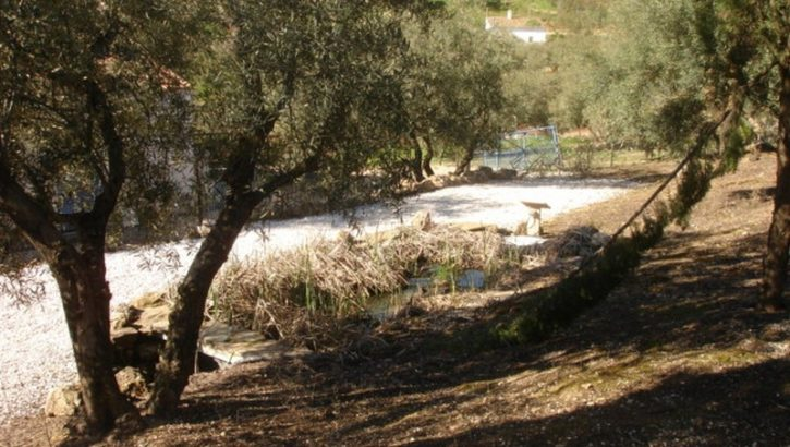 AM28 – Finca with pool, stables and B&B potential near Antequera, Málaga.