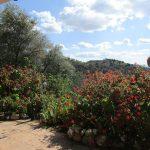 APA271- Charming three bedroom country villa in Alora
