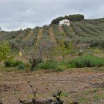 "AM161 – Nice house near the hamlet ""Las Lagunillas"" Antequera."