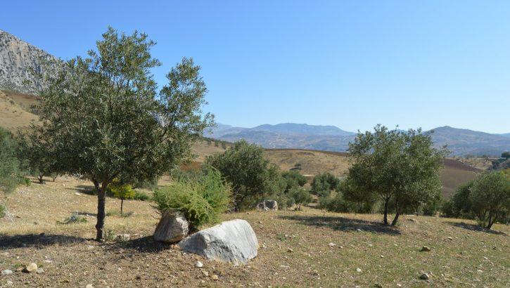 AM171 – Nice piece of land.