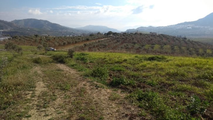 "AM178 – Nice plot on the northern side of Alora in the ""Pelonas"" area."