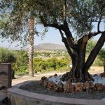 AM176 – Beautiful, solid built house in Alhaurin el Grande.