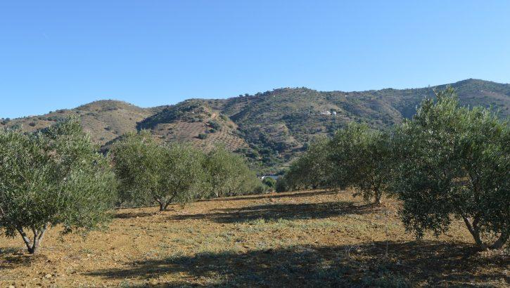 AM181 – Plot of land in a beautiful location near Alora.