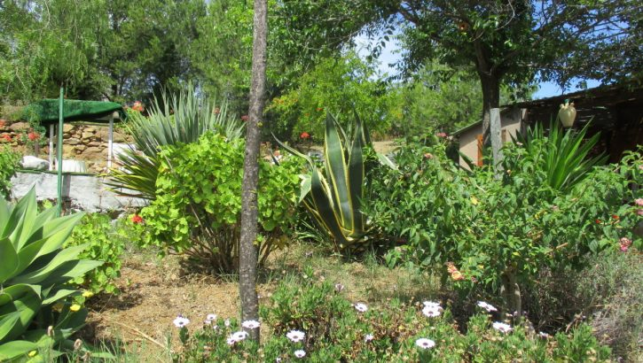APA335- Rural property between the towns of Alora and Pizarra