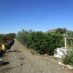 APA340- Small country house on a plot of 11.000 m2 at 4 kms from Alora