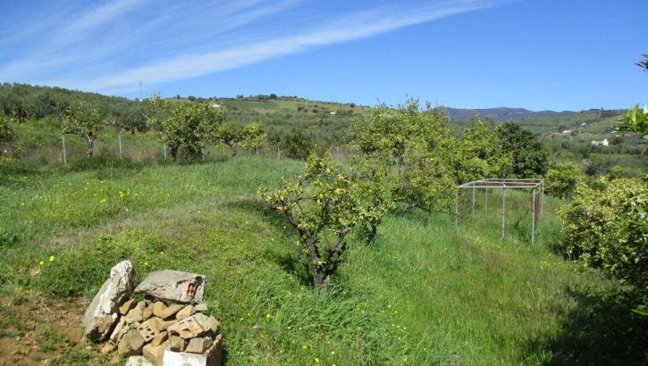 APA373- Charming little country retreat in Alora
